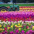 John Deere In Spring by Patricia Babbitt