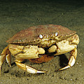 Jonah Crab by Andrew J. Martinez