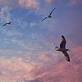 Jonathan Fly Free by Bobbee Rickard