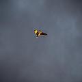 Jonathan Livingston Seagull by Jakub Sisak