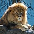 Joshua The Lion On His Rock by Jennifer Craft