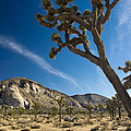 Joshua Tree Afternoon by Doug Matthews