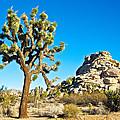 Joshua Tree And Jumbo Rocks Near Quail Spring In Joshua Tree Np-ca  by Ruth Hager