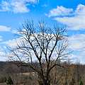 Joshua Tree Country Style by Art Dingo