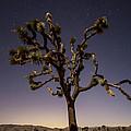 Joshua Tree Night by Lee Kirchhevel