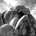Joshua Tree Rocks Joshua Tree by William Dey
