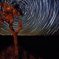Joshua Tree Star Trails by Peter Tellone