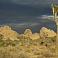 Joshua Tree Sunset by Lee Kirchhevel
