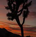 Joshua Tree Sunset Silhouette 6 by Lee Kirchhevel