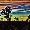 Joshua Trees In Cima Valley by Evie Carrier