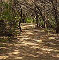 Journey Through The Cedars by Bob Phillips
