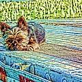 'jovie' Truckin Dogs Need Breaks Too by Robert Rhoads