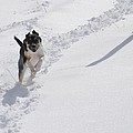 Joy Of Snow by Christina McKinney