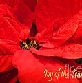 Joy Of The Season by Lizi Beard-Ward