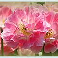 Joyful Spring Tulips by Rosanne Jordan