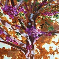 Judas Tree Jerusalem by Nigel Radcliffe