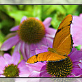 Julia Butterfly 2 by Walter Herrit