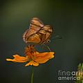 Julia Butterfly by Heiko Koehrer-Wagner