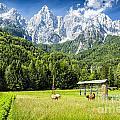 Julian Alps Farm by Timothy Hacker