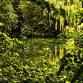 July Tranquil Indian Lake by Thomas Woolworth