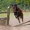Jump Jump by Angel Ciesniarska