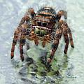 Jumper Spider 4 by Duane McCullough