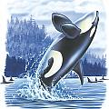 Jumping Orca by JQ Licensing