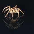 Jumping Spider by Robin Martin