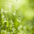 June Green Grass  by Elena Elisseeva