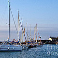 June Morning - Lyme Regis Harbour by Susie Peek