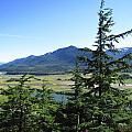 Juneau From Glacier Gardens by Jennifer Wheatley Wolf