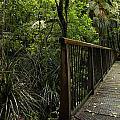 Jungle Bridge by Les Cunliffe