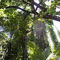 Jungle Canopy by Daniel Murphy