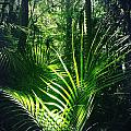 Jungle Fern by Les Cunliffe