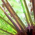 Jungle Fever by Steve Taylor
