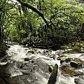Jungle Flow by Les Cunliffe