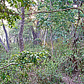 Jungle Forest In Chitwan Np-nepal by Ruth Hager