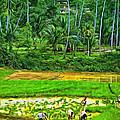 Jungle Homestead - Paint  by Steve Harrington