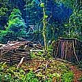 Jungle Homestead by Steve Harrington