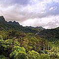 Jungle Landscape by Tim Hester