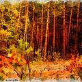 Jungle by Okan YILMAZ