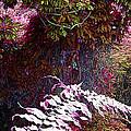 Jungle Red Tints by Ian  MacDonald