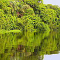Jungle River by Judith Russell-Tooth