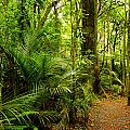 Jungle Scene by Les Cunliffe
