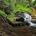 Jungle Stream Kauai by John Greaves