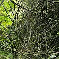 Jungle Vines by Les Cunliffe