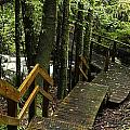 Jungle Walkway by Les Cunliffe