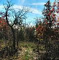 Junglescape4 2009 by Glenn Bautista