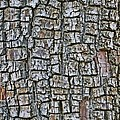 Juniper Bark- Texture Collection by Tom Janca