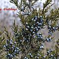 Juniper Berries - Happy Holidays by Peggy King